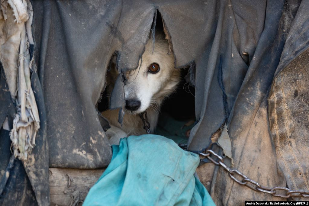 This dog survived a missile that hit his mistress's summer kitchen. The dog and his kennel were thrown violently into the air by the blast. Nothing is left of the kitchen (Ukraine reporter Andriy Dubchak)