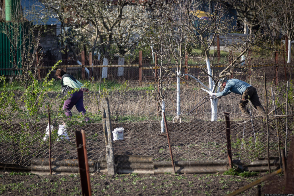 "But the RFE/RL photojournalist says that, while the virus is upending life in his hometown, many residents are ""reverting to a traditional survival tactic in times of crisis."" They are ""planting potatoes.""   Photographer Andriy Dubchak / Ukraine"